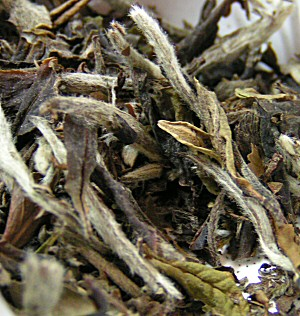 Pai Mu Tan. White Tea.